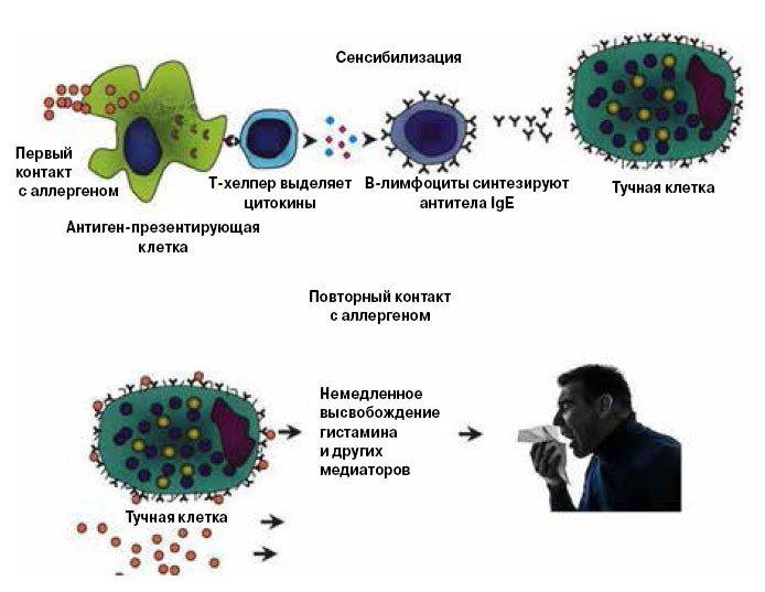 Механизм действия СИТ