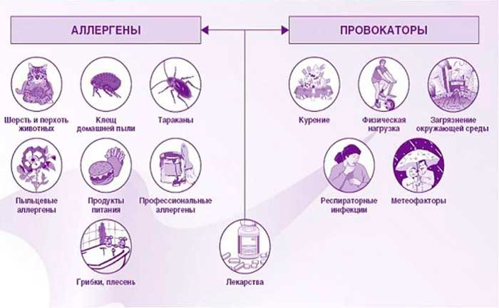 аллергены и провокаторы астмы
