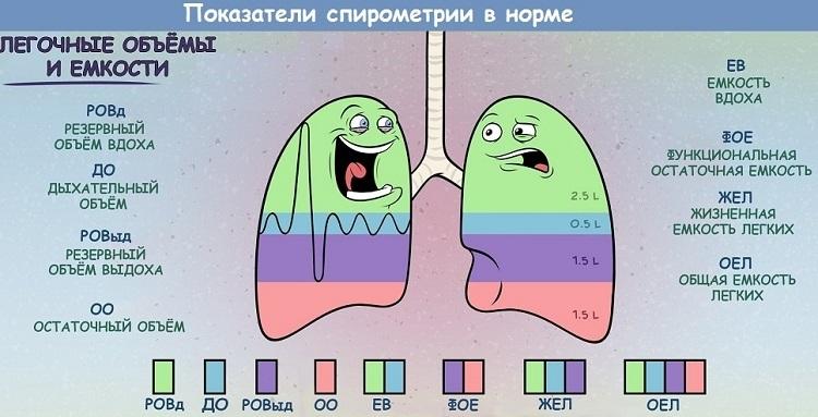 Показатели спирометрии в норме