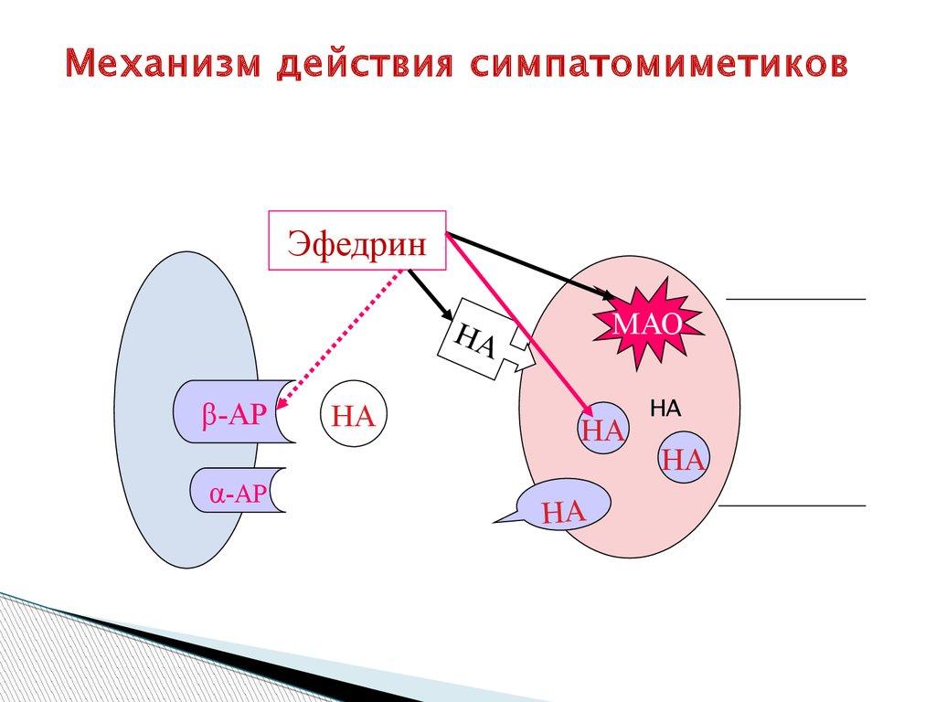симптатомиметики для лечения бронхиальной астмы