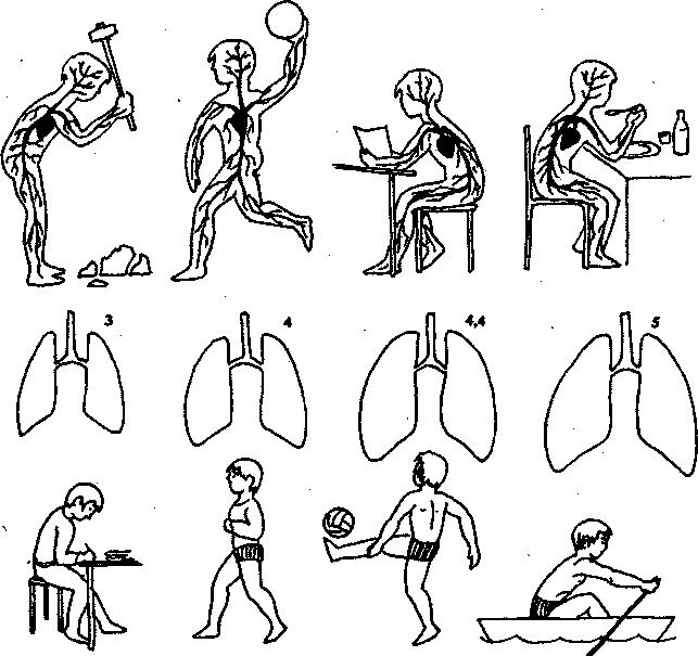 легкие при разных упражнениях