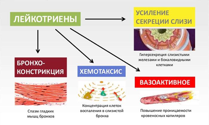 лейкотриены