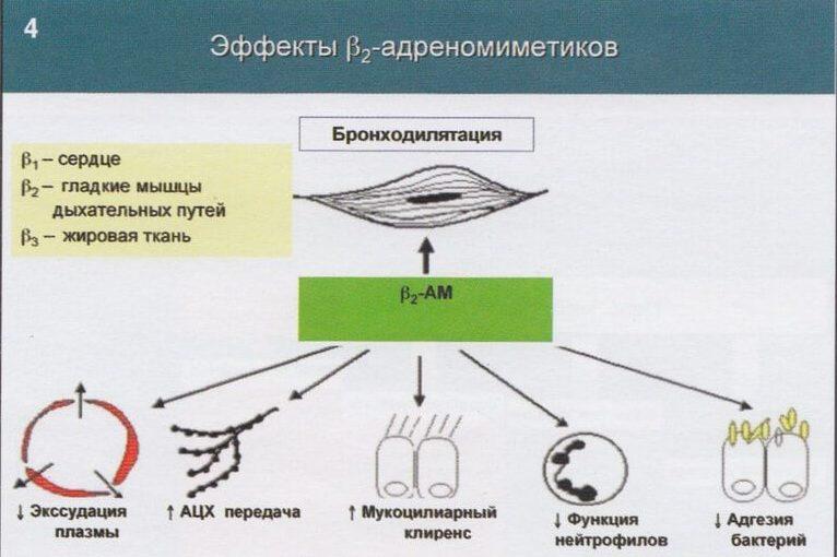 Механизм действия адреномиметиков