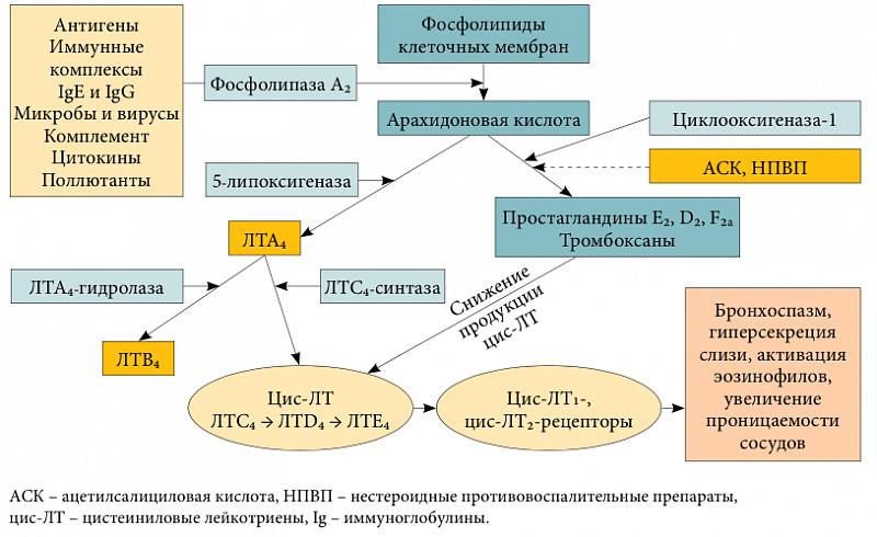 лейкотриеновые антагонисты