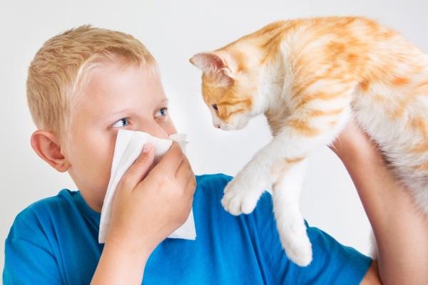 мальчик с аллергией на шерсть